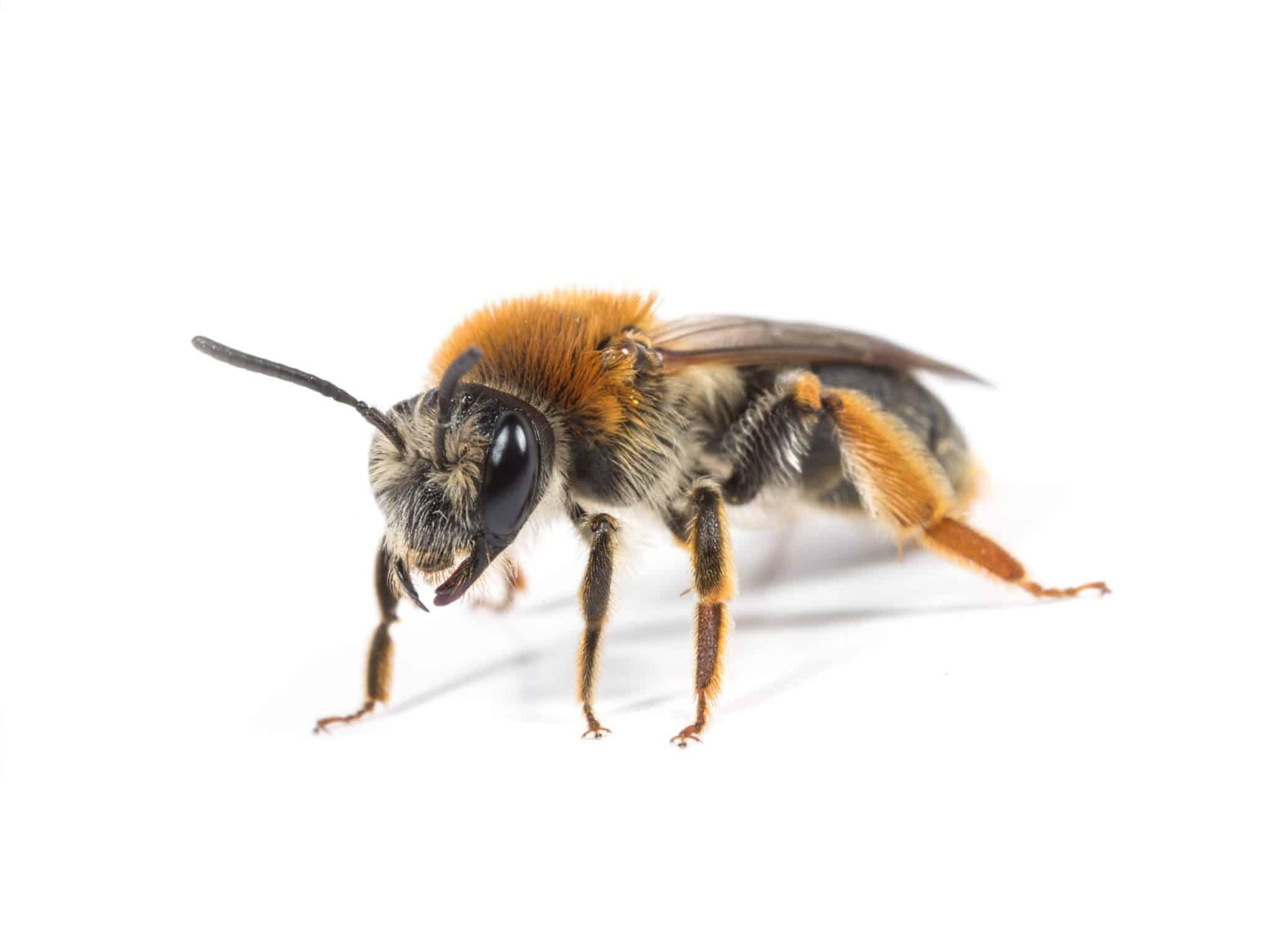 Bee Sting Eye Associates of South Texas